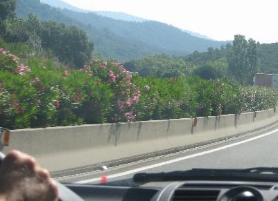 les fleurs del'autoroute