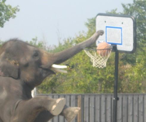 elephant hoops - african lion safari