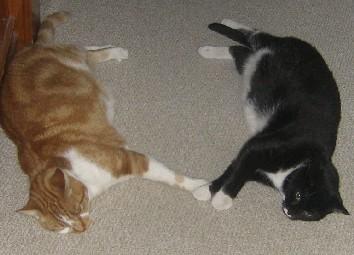 cat nap2
